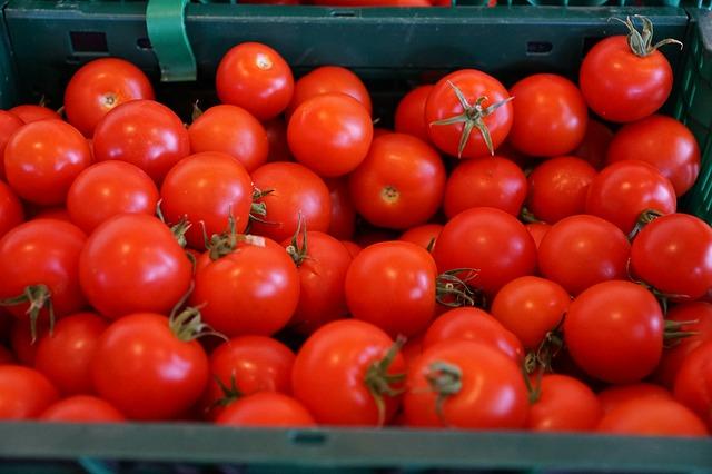 Свежие помидоры для качественного кетчупа